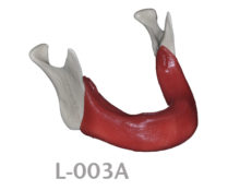 BondeModels L003A 220x174 - L-003A: Severely reabsorbed edentulous mandible with soft tissue. Real Human Size.