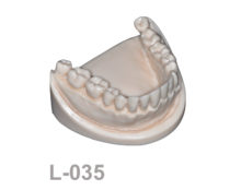 BondeModels L035 220x174 - L-035: Mandible with fixed teeth without soft tissue.