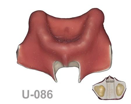BondeModels U086 - U-086: Modelo maxilar desdentado. Recrea un paciente real con encía, crestas cicatrizadas y senos.