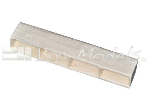 BoneModels BS003A 01 1 500x375 - BS-003A: Bone stick with 4 sinus.
