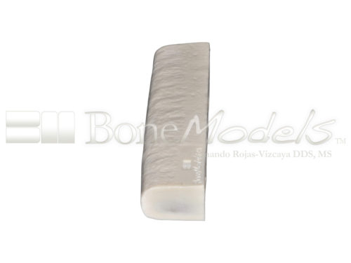 BoneModels BS003A 03 1 500x375 - BS-003A: Bone stick with 4 sinus.