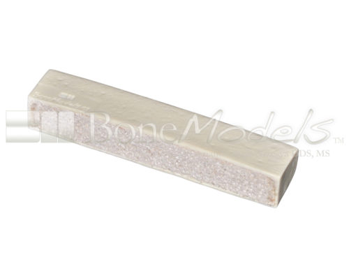 BoneModels BS003C 01 1 500x375 - BS-003C: D1+D3 Bone stick.