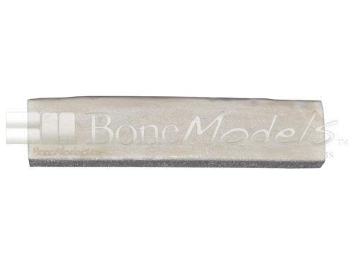 BoneModels BS003C 02 1 500x375 - BS-003C: D1+D3 Bone stick.