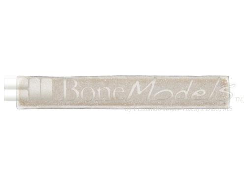 BoneModels BS003D 03 1 500x375 - BS-003D: D1+D4 Bone stick.