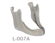 BoneModels L007A 220x174 - L-007A: Highly severely reabsorbed edentulous mandible and with knife edge.