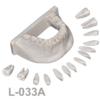 BoneModels L033A 100x100 - L-034A: Mandible with all removable teeth with soft tissue.