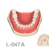 BoneModels L047A 1 100x100 - L-047B: Mandible with ivorine teeth. This model fits with U-066B maxilla.