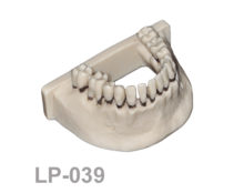 BoneModels LP039 1 220x174 - LP-039: Calculus teeth mandible without soft tissue. Type 4.