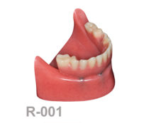 BoneModels R001 1 220x174 - R-001: Rose Mandible with protheses.