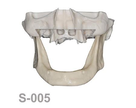 BoneModels S 005 - S-005: Half skull with full anatomy.