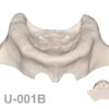 BoneModels U001B 1 100x100 - U-002D: Edentulous maxilla with both sinuses one of them thicker than the other.