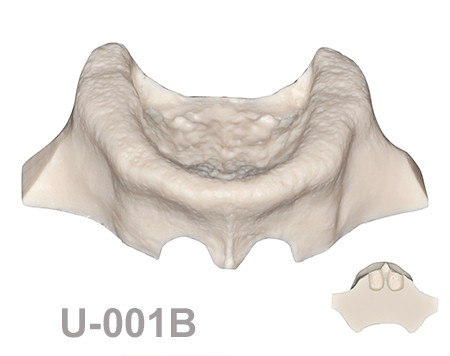 BoneModels U001B 1 - U-001B: Edentulous maxilla for the skull.