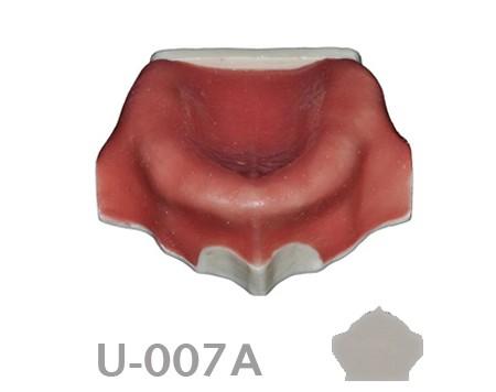 BoneModels U007A 1 - U-007A: Edentulous maxilla with soft tissue.