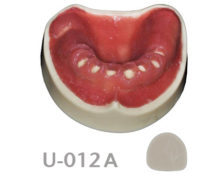 BoneModels U012A 220x174 - U-012A: Edentulous maxilla after extractions with soft tissue.