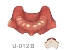 BoneModels U012B 1 220x174 - U-012B: Edentulous maxilla after extractions with soft tissue for the skull.