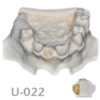 BoneModels U022 1 100x100 - U-023: Partially edentulous maxilla with 1 socket, healed ridges and soft tissue.