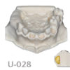 BoneModels U028 1 100x100 - U-029A: Partially edentulous maxilla. Perfect sockets in both centrals and in 1 molar, 1 socket with dehiscence in the canine with soft tissue.