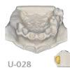 BoneModels U028 1 100x100 - U-029A: Modelo maxilar parcialmente desdentado. Alvéolos perfectos en ambos centrales y un molar y un alvéolo con dehiscencia en el canino y con encía.