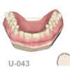 BoneModels U043 100x100 - U-042: Partially edentulous maxilla with thin ridge for bone graft augmentation in edentulous right side. Thick palatal soft tissue to take a connective tissue graft.