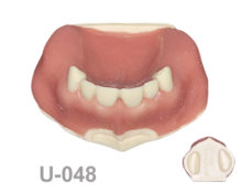 BoneModels U048 220x174 - U-048: Partially edentulous maxilla with soft tissue and sinuses.