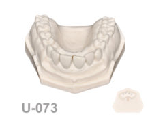 BoneModels U073 1 220x174 - U-073: Maxillary model with some ivorine teeth in the anterior area and without soft tissue in the anterior area.