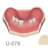 BoneModels U078 1 100x100 - U-077: Maxillary model with some Ivorine teeth in the anterior area and healed ridges. Without soft tissue.