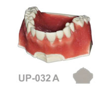 BoneModels UP032A 220x174 - UP-032A: Maxilla with 1 socket and gingival recession Miller class I and II, ideal for soft tissue grafting and root coverage.