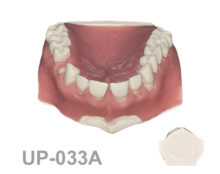 BoneModels UP033A 1 220x174 - UP-033A: Maxilla with one socket, gingival recession in 5 anterior teeth and 2 bone defects. Ideal for soft tissue grafting and root coverage.