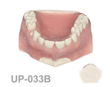 BoneModels UP033B 220x174 - UP-033B: Maxilla with one socket, without gingival recession in five anterior teeth and two bone defects.