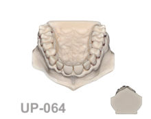 BoneModels UP064 1 220x174 - UP-064: Calculus teeth maxilla without soft tissue. Type 1.