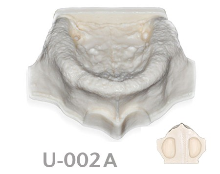 BoneModels U 002A - U-002A: Edentulous maxilla with sinuses.