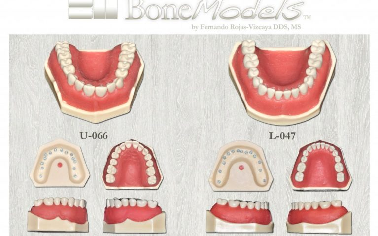 promo bm ivorina 767x479 - Ivorine teeth BoneModels